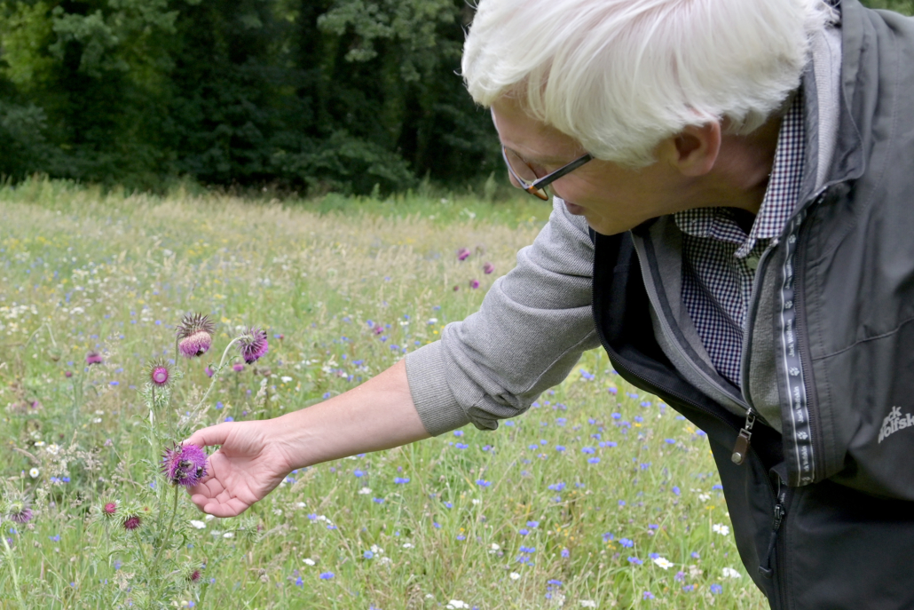 Ulf Feuerstein beobachtet die Insekte am Heiligenberg aus. Eine Blumenwiese für Bienen.