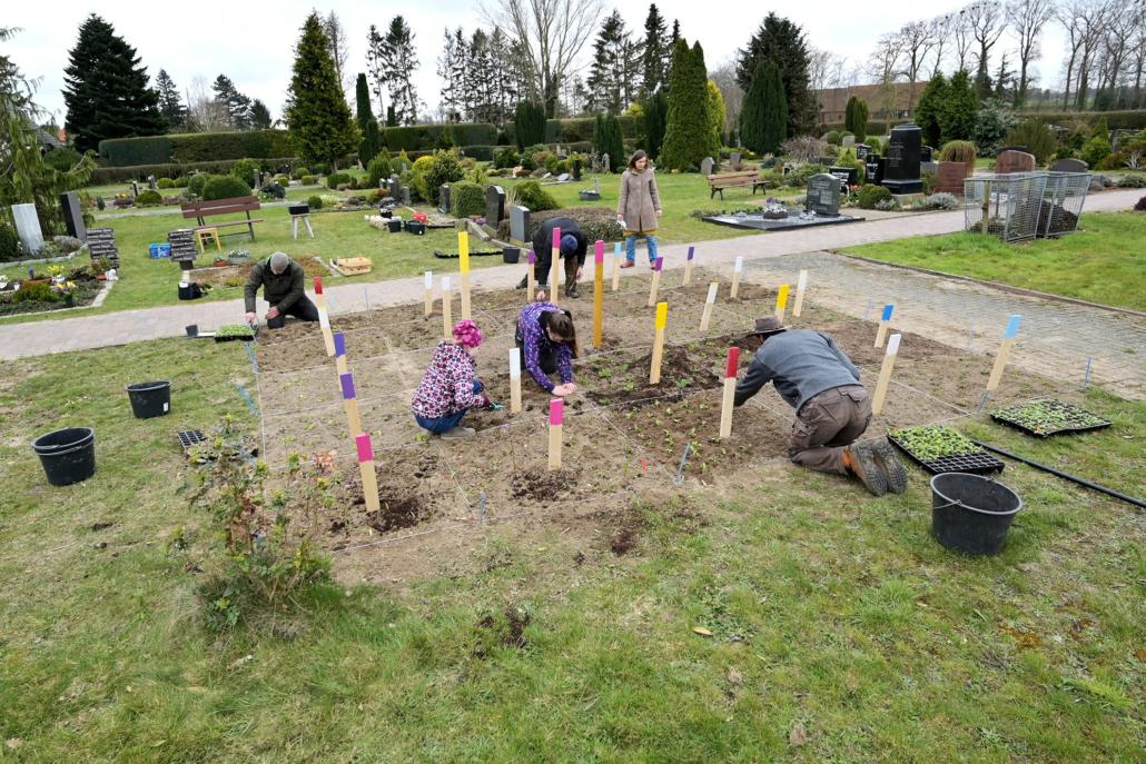 In 25 Quadrate wurde eine freie Friedhofsfläche eingeteilt. Helfer der Blühinitiative Asendorf pflanzen in jedes Quadrat eine Sorte Blumen.