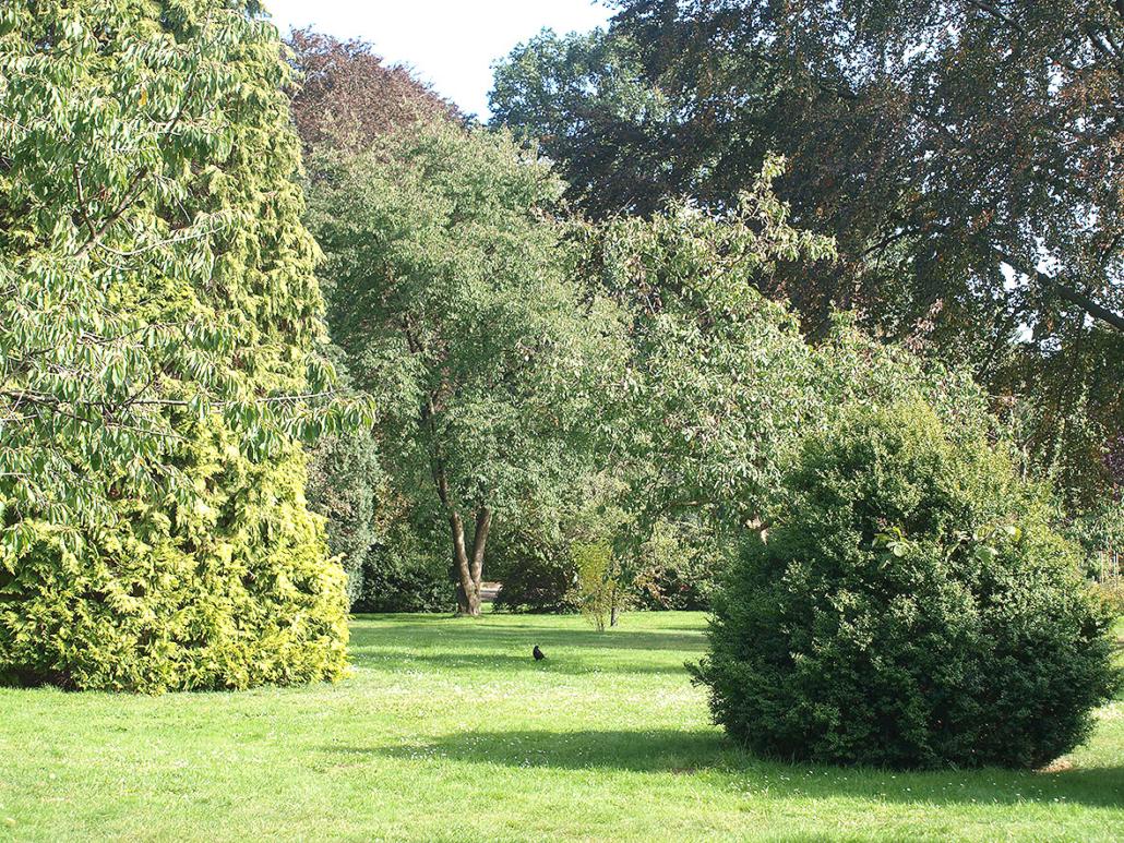 Ein Park mit grünen Bäumen und Sträuchern.