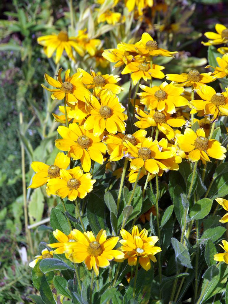 Gelbe Blumen.